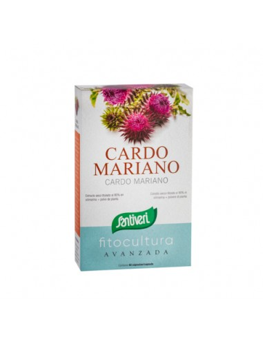 CARDO MARIANO (Silybum Marianum)...